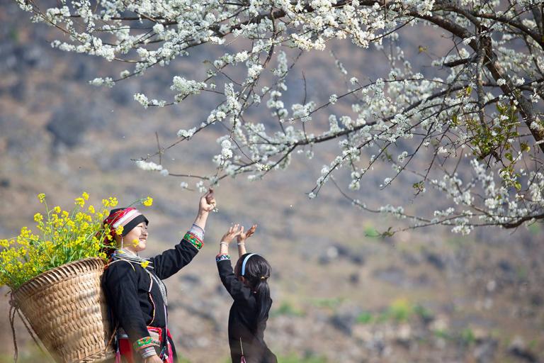 Tour du lịch Mộc Châu mùa hoa 2 ngày 1 đêm giá rẻ - Bigtravel.vn