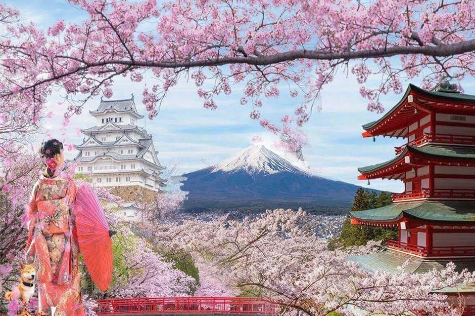 Tour du lịch Nhật Bản 6 ngày 5 đêm Mùa Hoa Anh Đào - Bigtravel.vn